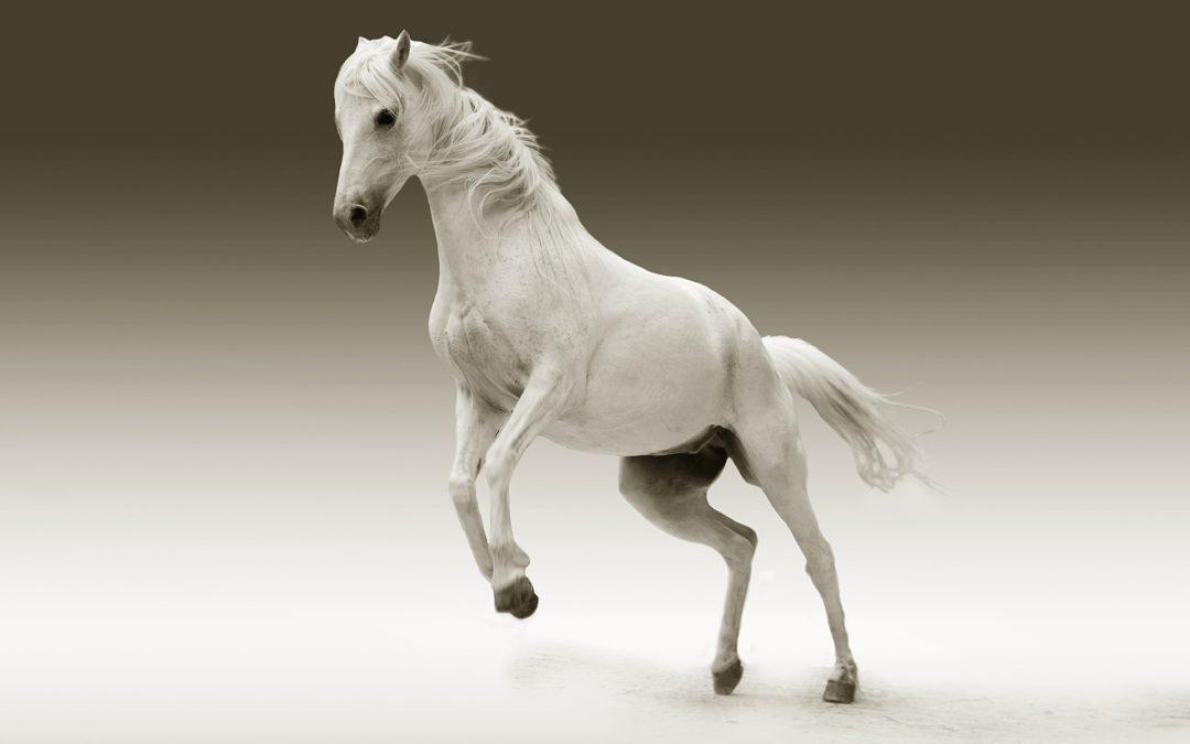 Waar is de prins op het witte paard?